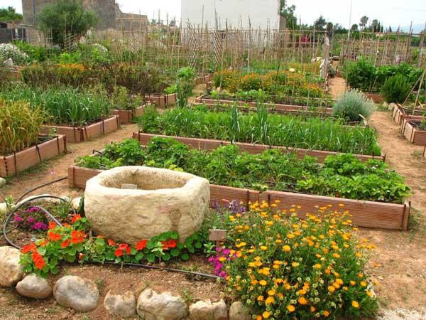 En el huerto de las flores el correo del sol for Asociacion de plantas en el huerto