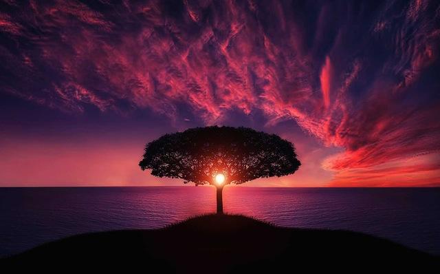 árbol mágico
