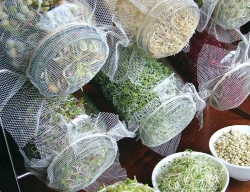 C mo hacer un huerto urbano de germinados laura kohan - Como hacer un huerto urbano ...