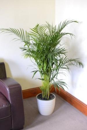 Las 13 mejores plantas de interior limpian el aire y son - Plantas de interior para salon ...
