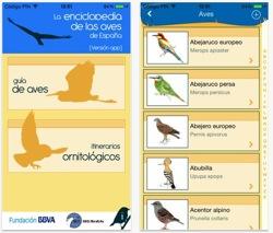 Presentan Una App Gratuita Para Conocer Y Escuchar Las Aves Españolas En El Móvil El Correo Del Sol