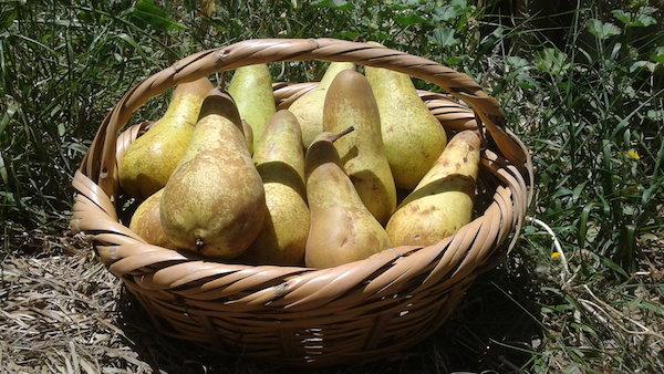 Los alimentos ecológicos reducen el riesgo de cáncer según un estudio francés
