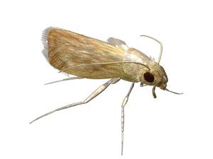 Combatir los insectos de forma natural el correo del sol - Como eliminar la polilla de la madera ...