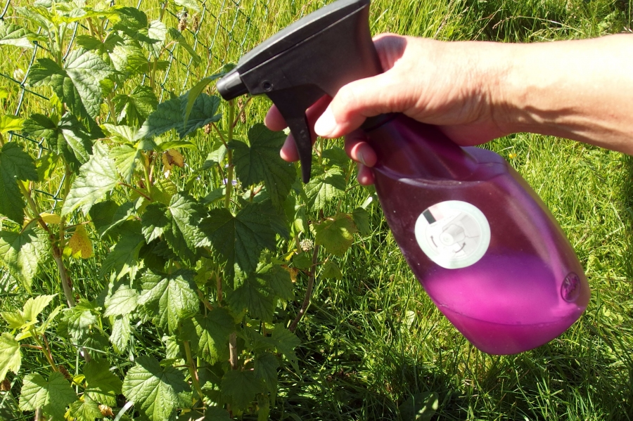 Infusiones contra las plagas de verano del balc n y el jard n el correo del sol - El jardin del sol ...