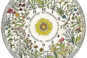reloj de carl von linné