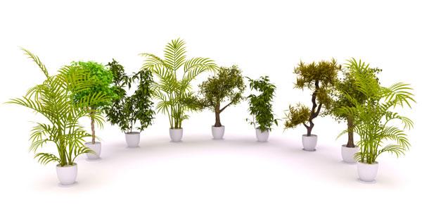 10 plantas que limpian el aire interior el correo del sol - Plantas de interior que purifican el aire ...