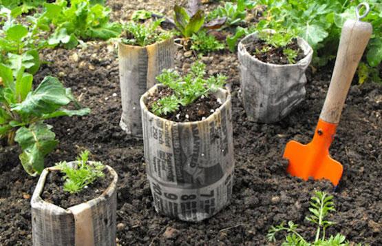 Del semillero a la tierra el correo del sol - Tierra para semilleros ...