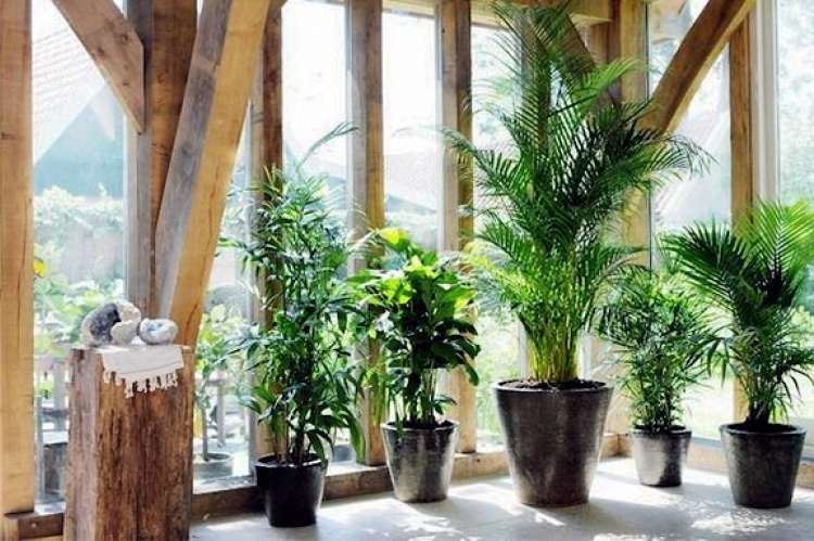 Las 13 mejores plantas de interior limpian el aire y son for Plantas de interior muy duraderas