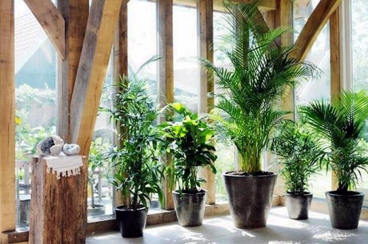 Las Habitaciones Con Plantas ...
