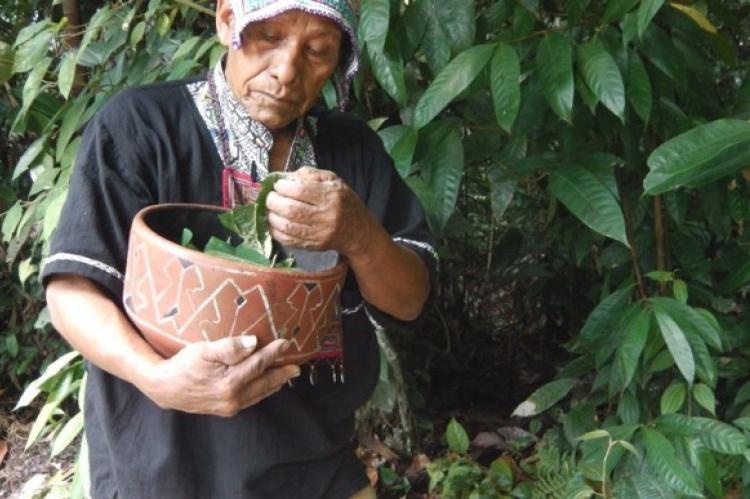 Las medicinas de la selva   El Correo del Sol
