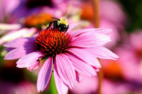 La abeja y la flor